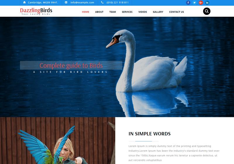 Dazzling-Birds-1 - 56+ Best Free Animals & Pets HTML Website Templates