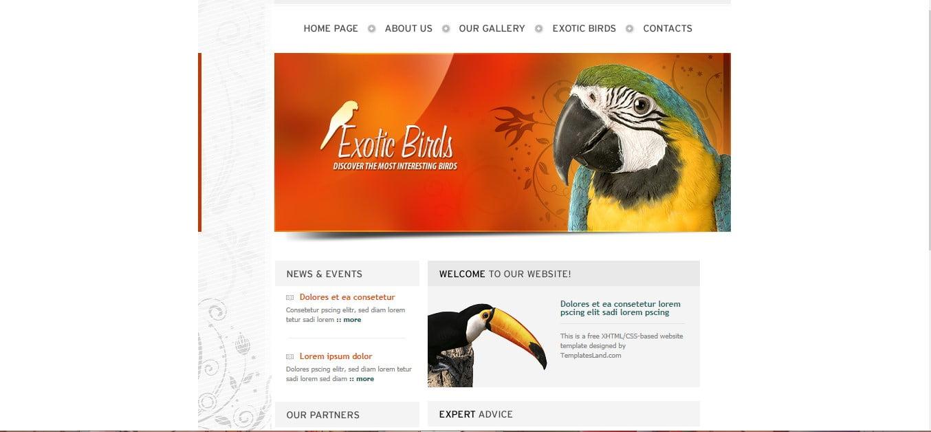 EXOTIC-BIRDS - 56+ Best Free Animals & Pets HTML Website Templates