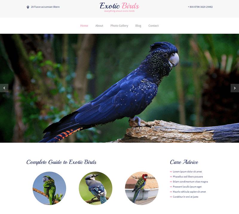 Exotic-Birds-1 - 56+ Best Free Animals & Pets HTML Website Templates