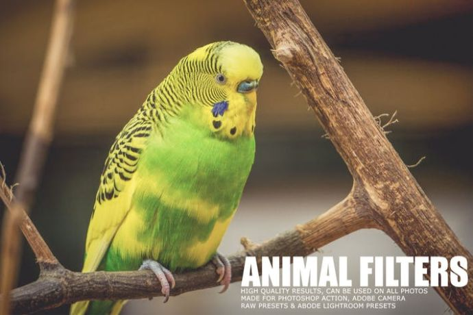 Animal-Photography-Lightroom-Presets - 75+ Awesome Lightroom Creative Digital Photography [year]