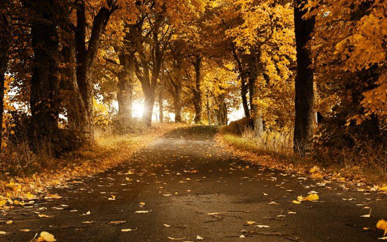 Autumn-Breeze-Wallpaper-1920x1200-768x480 - 50+ Free Download Full HD Autumn Wallpapers [year]