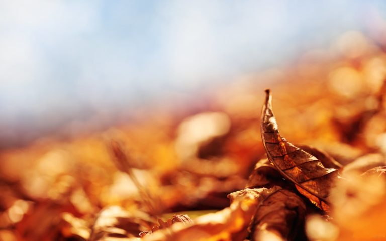 Autumn-Dry-Leaves-Wallpaper-2560x1600-768x480 - 50+ Free Download Full HD Autumn Wallpapers [year]