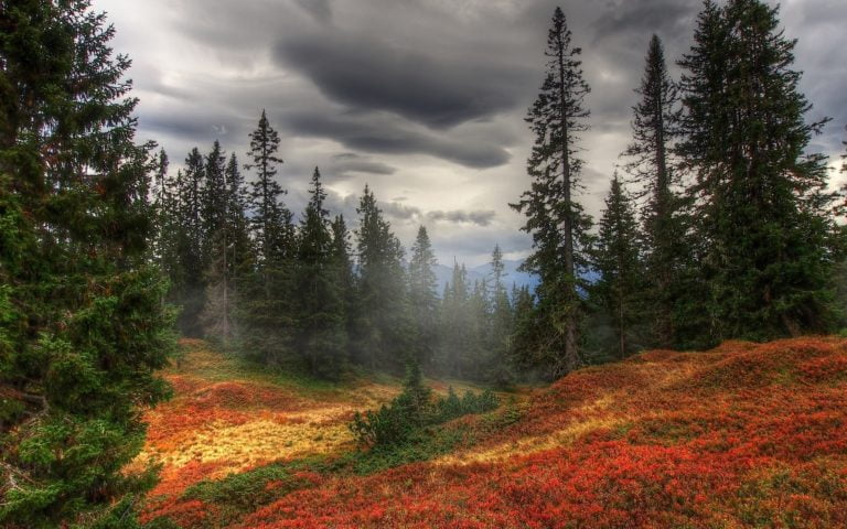 Autumn-Fog-Trees-Wallpaper-2560x1600-768x480 - 50+ Free Download Full HD Autumn Wallpapers [year]