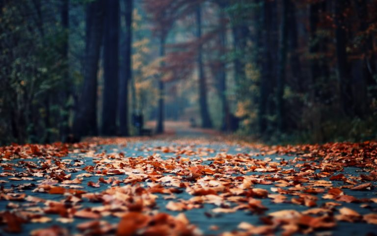 Autumn-Foliage-In-The-Park-Wallpaper-2560x1600-768x480 - 50+ Free Download Full HD Autumn Wallpapers [year]