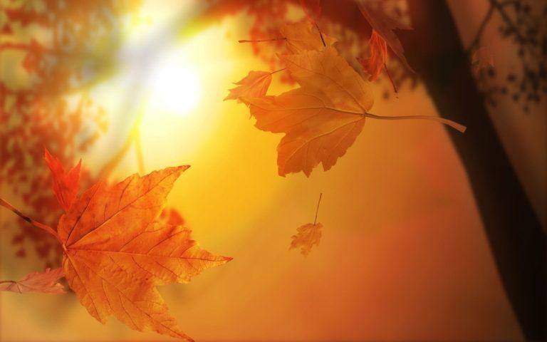 Autumn-Leafs-Wallpaper-1920x1200-768x480 - 50+ Free Download Full HD Autumn Wallpapers [year]