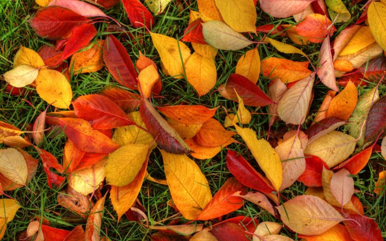Autumn-Leaves-Wallpaper-1920x1200-768x480 - 50+ Free Download Full HD Autumn Wallpapers [year]