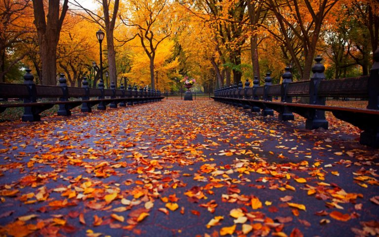 Autumn-Nature-Park-Trees-Leaves-Road-Wallpaper-2880x1800-768x480 - 50+ Free Download Full HD Autumn Wallpapers [year]