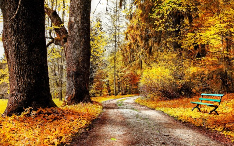 Autumn-Park-Nature-Trees-Leaves-Road-Wallpaper-2880x1800-768x480 - 50+ Free Download Full HD Autumn Wallpapers [year]