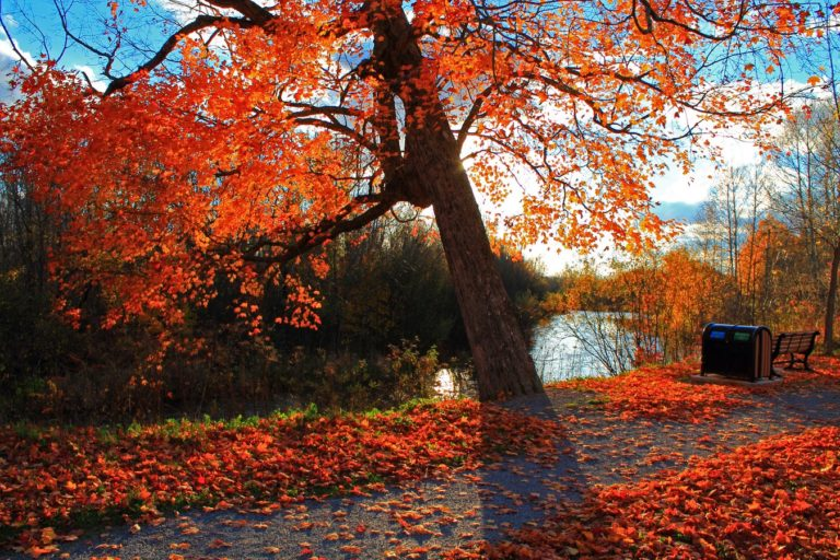 Autumn-Park-River-Wallpaper-1350x900-768x512 - 50+ Free Download Full HD Autumn Wallpapers [year]