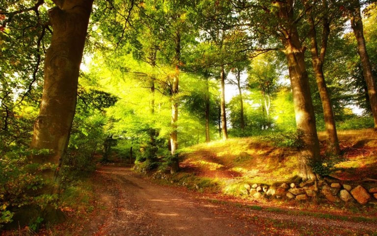 Autumn-Path-In-Forest-Wallpaper-2560x1600-2560-X-1600-768x480 - 50+ Free Download Full HD Autumn Wallpapers [year]