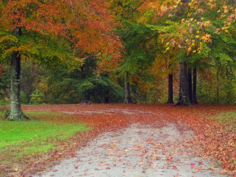 Autumn-Road-Trees-Wallpaper-1200x900-768x576 - 50+ Free Download Full HD Autumn Wallpapers [year]
