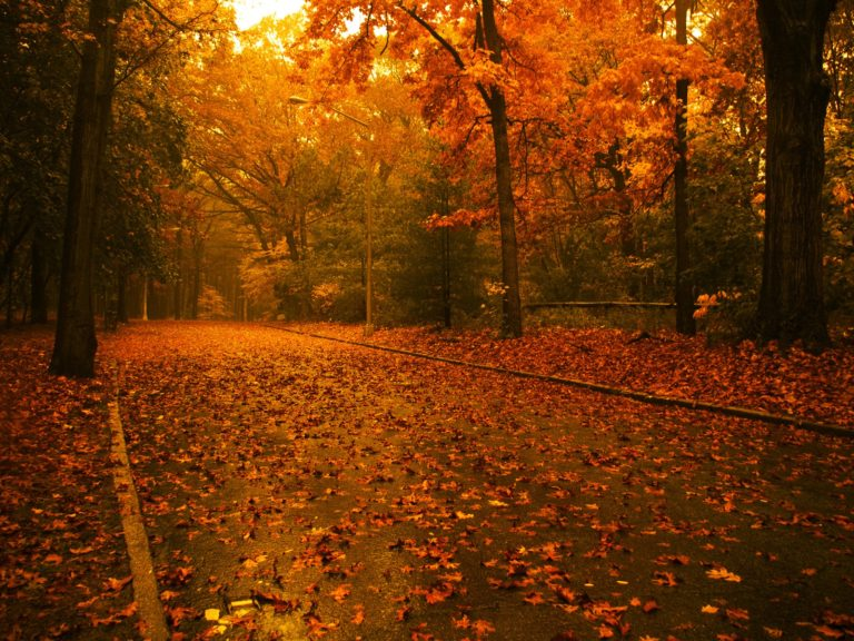 Autumn-Road-Wallpaper-1600x1200-768x576 - 50+ Free Download Full HD Autumn Wallpapers [year]