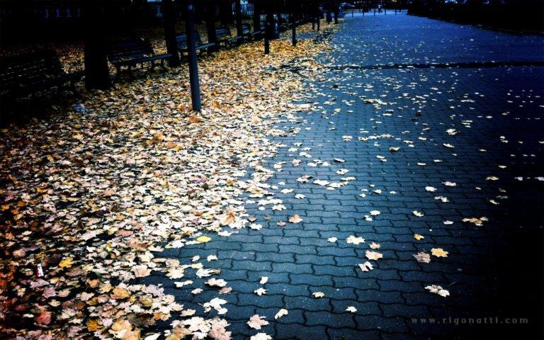 Autumn-Season-Leaves-Fallen-1920-X-1200-768x480 - 50+ Free Download Full HD Autumn Wallpapers [year]