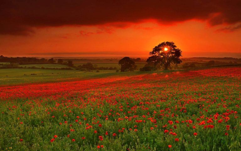 Autumn-Sun-Flowers-1920-X-1200-768x480 - 50+ Free Download Full HD Autumn Wallpapers [year]