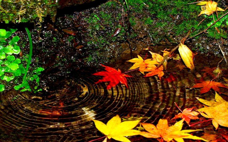 Autumn-Swirl-1920-X-1200-768x480 - 50+ Free Download Full HD Autumn Wallpapers [year]