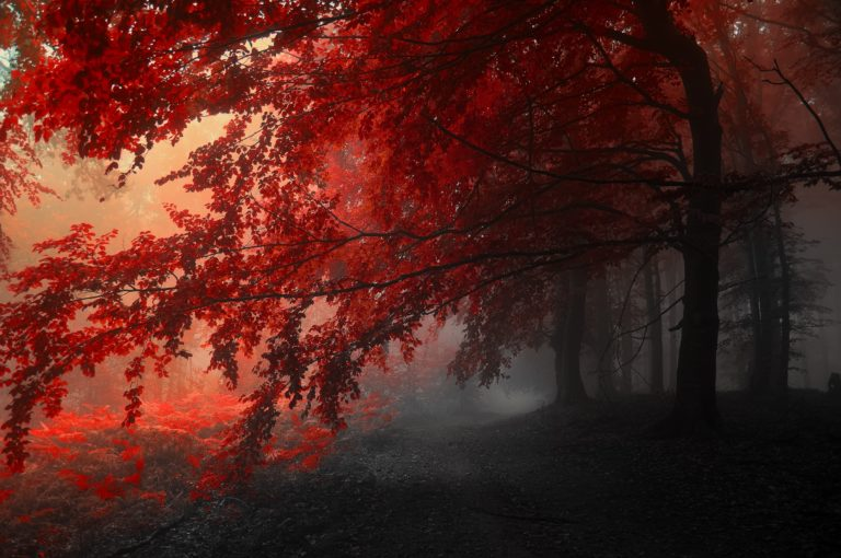 Autumn-Trees-Road-Fog-Landscape-4288-X-2848-768x510 - 50+ Free Download Full HD Autumn Wallpapers [year]