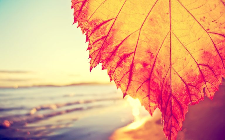 Autumnal-Leaf-Covering-The-Beach-Wallpaper-2560x1600-768x480 - 50+ Free Download Full HD Autumn Wallpapers [year]