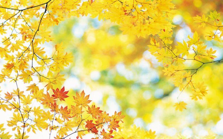 Beautiful-Autumn-Wallpaper-1920x1200-768x480 - 50+ Free Download Full HD Autumn Wallpapers [year]