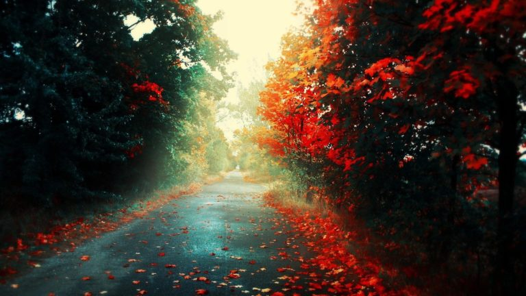 Colorful-Autumn-Road-1920-X-1080-768x432-1 - 50+ Free Download Full HD Autumn Wallpapers [year]