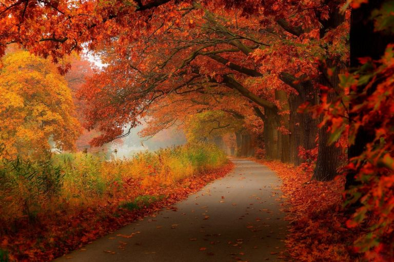 Free-Download-Autumn-Wallpapers-1 - 50+ Free Download Full HD Autumn Wallpapers [year]