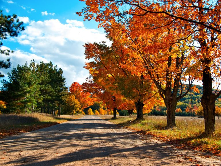 Free-Download-Autumn-Wallpapers-2 - 50+ Free Download Full HD Autumn Wallpapers [year]