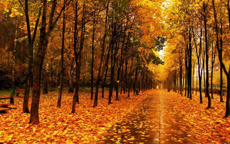Free-Download-Autumn-Wallpapers-3 - 50+ Free Download Full HD Autumn Wallpapers [year]