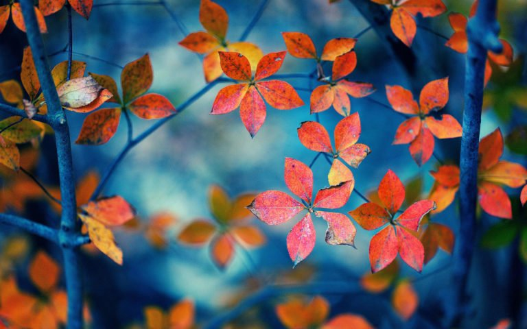 Free-Download-Autumn-Wallpapers - 50+ Free Download Full HD Autumn Wallpapers [year]