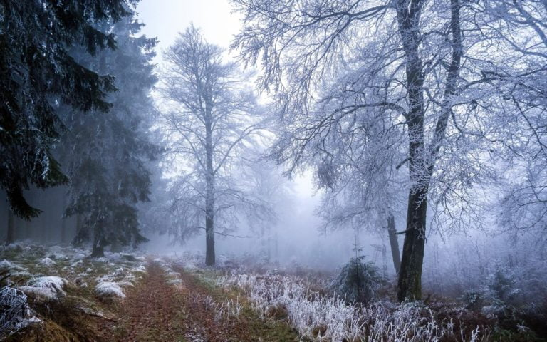 Frost-Autumn-Fall-Nature-Landscapes-1920-X-1200-768x480 - 50+ Free Download Full HD Autumn Wallpapers [year]