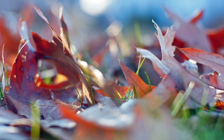 Leaves-Autumn-Grass-1920-X-1200-768x480 - 50+ Free Download Full HD Autumn Wallpapers [year]