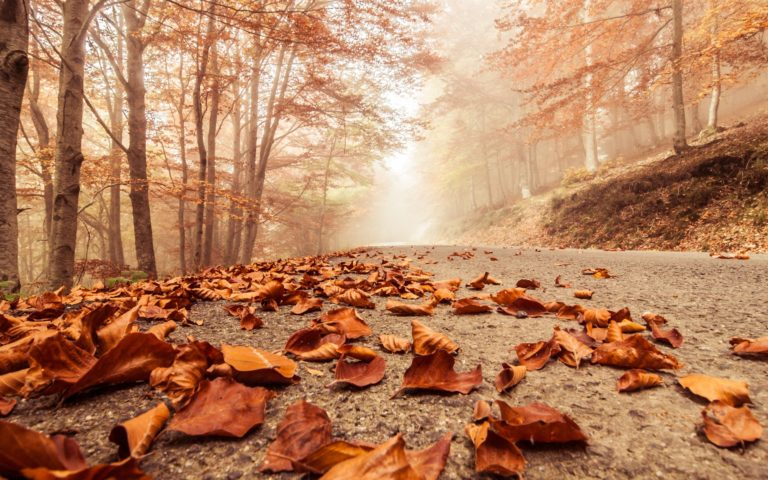 Misty-Foggy-Road-Autumn-Beech-2880-X-1800-768x480 - 50+ Free Download Full HD Autumn Wallpapers [year]
