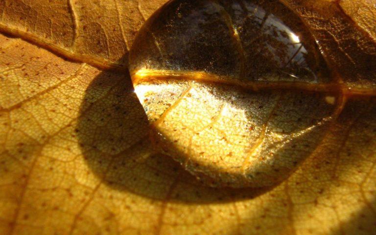 Nature-Autumn-Season-1920-X-1200-768x480 - 50+ Free Download Full HD Autumn Wallpapers [year]