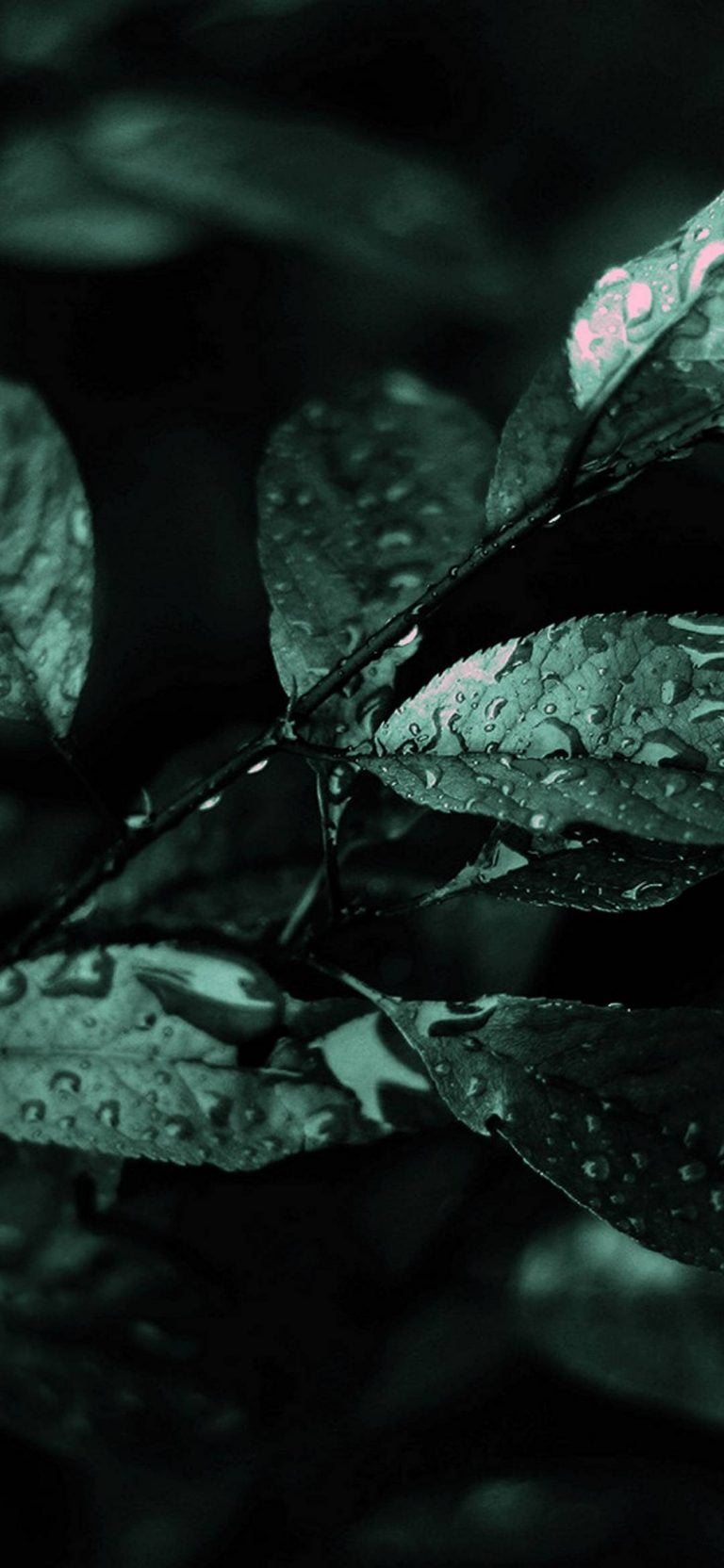 Nature-Dark-Leaves-Macro-Depth-1080x2340-768x1664-2 - 51+ BEST Free vivo Z1 Pro Phone Wallpapers [year]