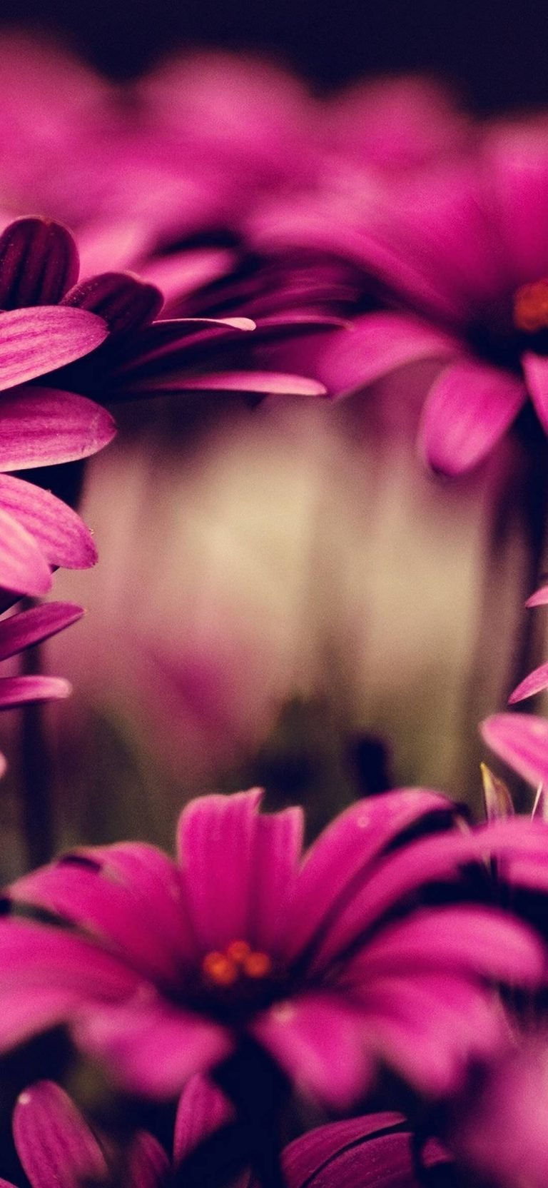 Nature-Flowers-Pink-1080x2340-768x1664-1 - 51+ BEST Free vivo Z1 Pro Phone Wallpapers [year]