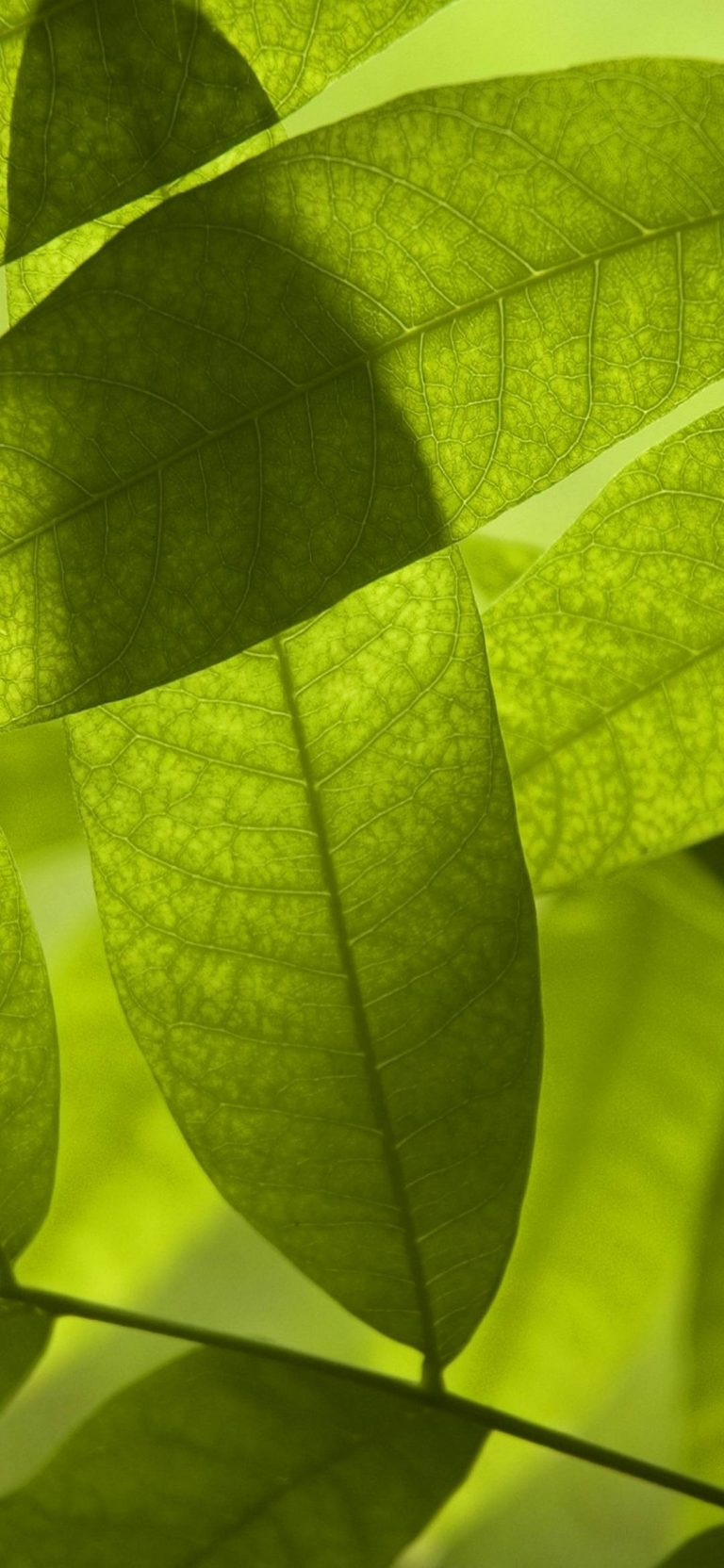Nature-Leaves-Digital-Art-Macro-1080x2340-768x1664 - 51+ BEST Free vivo Z1 Pro Phone Wallpapers [year]