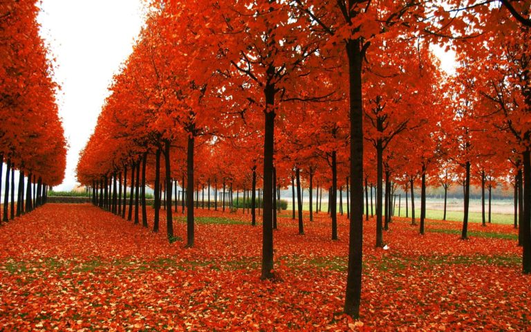 Park-Trees-Autumn-Wallpaper-1920x1200-768x480 - 50+ Free Download Full HD Autumn Wallpapers [year]