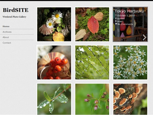 BirdSITE - 51+ Nice Free WordPress Themes For Photography [year]