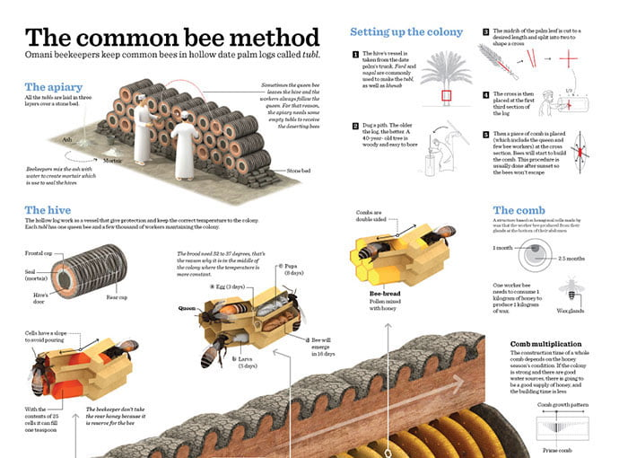 Beekeeping-In-Oman - 43+ BEST Free Awesome Infographic Designs IDEA [year]