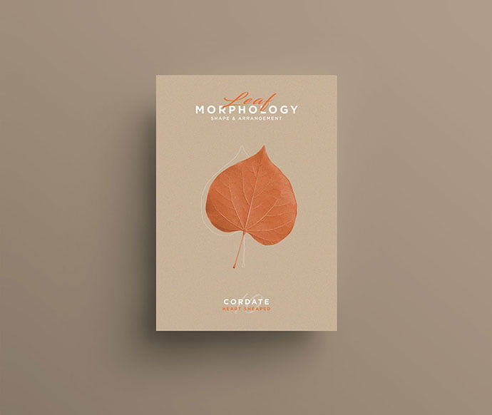 Leaf-Morphology - 38+ Awesome BEST Free Organic Shapes Poster Design [year]