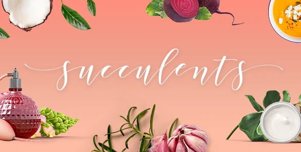 Succulents - 35+ TOP WordPress Lifestyle Themes [year]